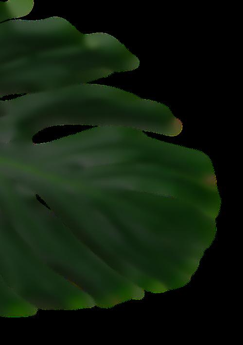 GEWARA Animation